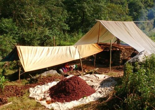 Cardamom drying